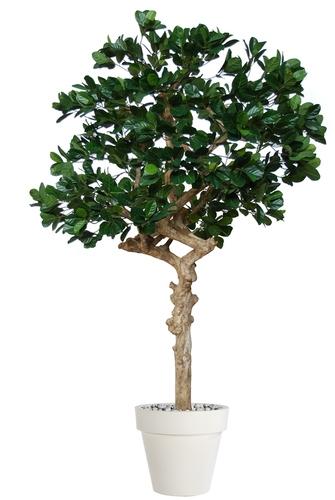 Jackfruit Nidra 250 cm Green