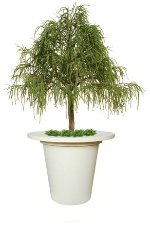 Juniper_Irish_Tree_320_cm_Green_V1469153
