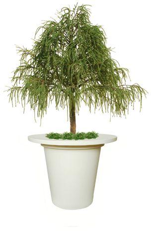 Juniper_Irish_Tree_320_cm_Green_V1469153