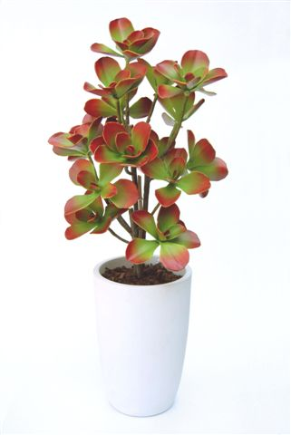 Kalanchoe_Butterfly_Plant_150_cm_Red_Green__V_4396B01