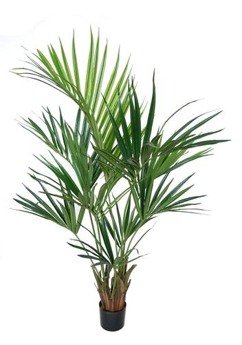 Kentia Palm w pot 160 cm w pot Green