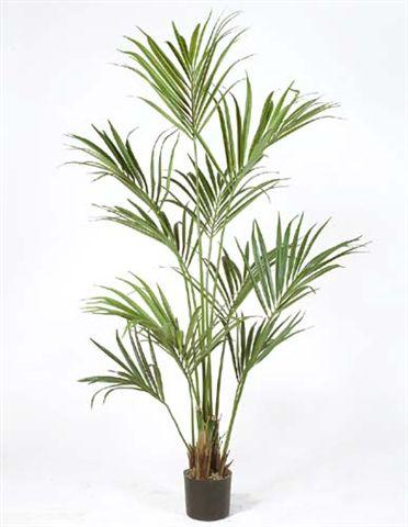 Kentia_Palm_W-Pot_180_cm_Green_4175GRN