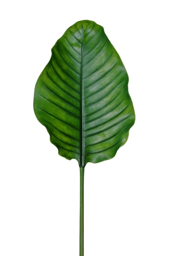 Leaf Bird of Paradise 95 cm Green