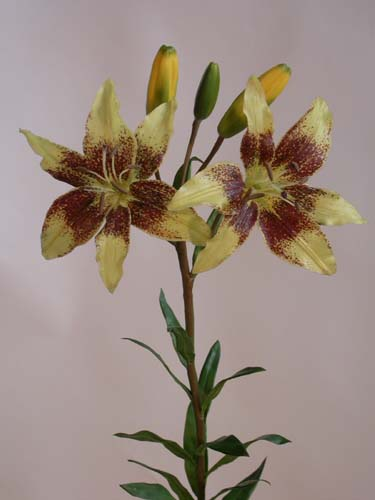 Lillium_Flower__85_cm_Gold_Rust_1477446