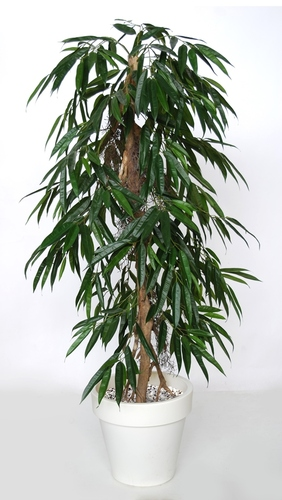 Longifolia Pendula 160 cm Green