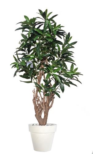 Mango Malabar 150 cm Green