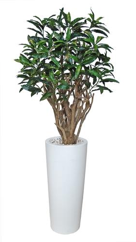 Mango Robusta 200 cm Green