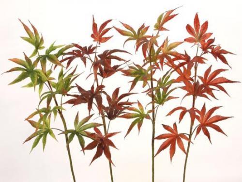Maple_Japanese_70_cm_4_colors_4380AST