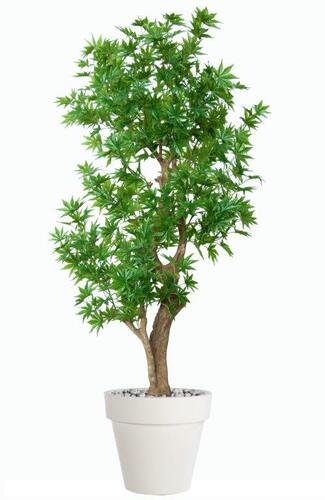 Maple Japanese Stylish 170 cm Green