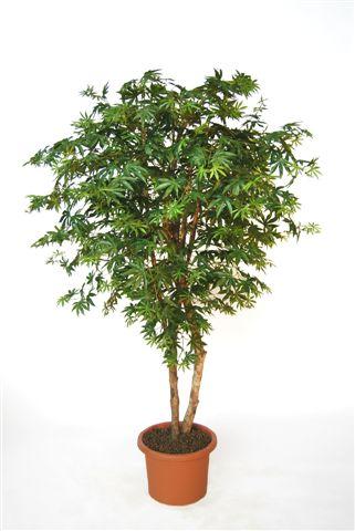Maple_Tree_220_cm_Green