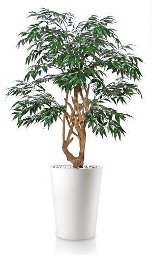 Myrsifolia Stylish 130 cm Green