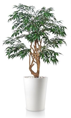 Myrsifolia Stylish 150 cm Green
