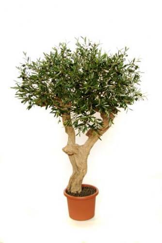 Olive_Amalfi_140_cm_Green
