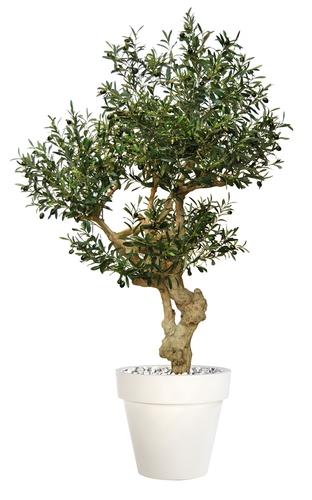 Olive Crown 180 cm Green