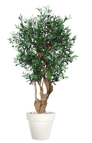 Olive UVR Malabar 150 cm Green