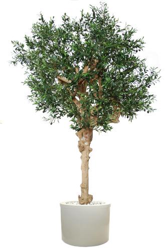 Olive UVR Nidra  260 cm Green