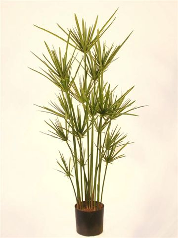 Papyrus_Plant_90_cm_Green_w-pot_4293GRN