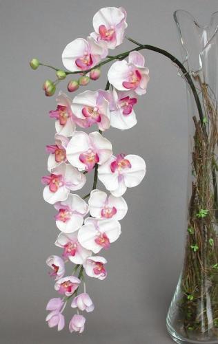 Phalaenopsis_Formosa_120_cm_Lilac_4161LIL