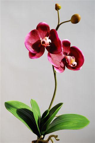 Phalaenopsis_Plant_45_cm_Purple_5018PUR[1]