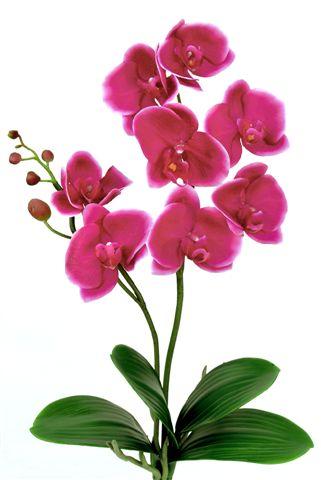 Phalaenopsis_Plant_60_cm_Pink_5016PNK