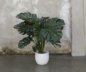 PHILO_MONSTERA
