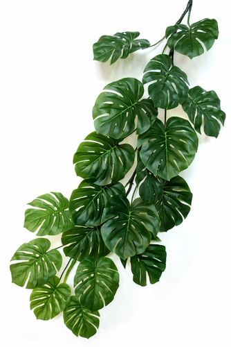Philodendron Giant 180 cm Green