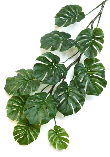 Philodendron Large 120 cm Green