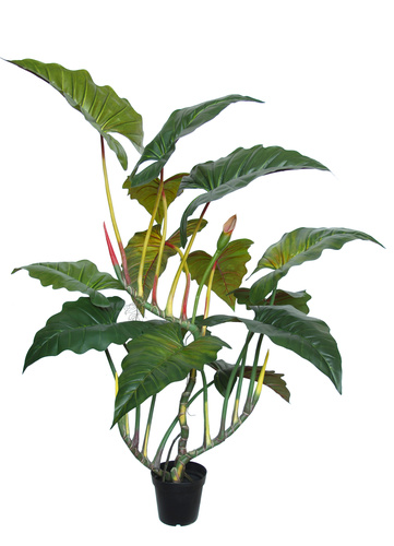 Philodendron Opal w pot 180 cm Green 5609GRN