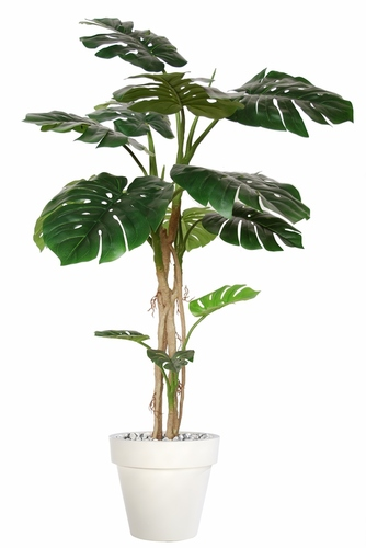 Philodendron Plant 180 cm w pot Green