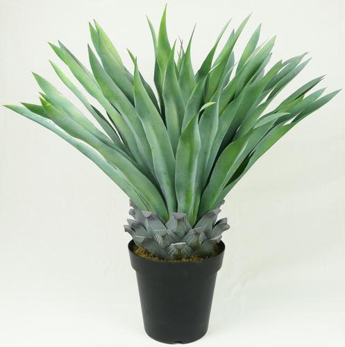 pianta senza vaso