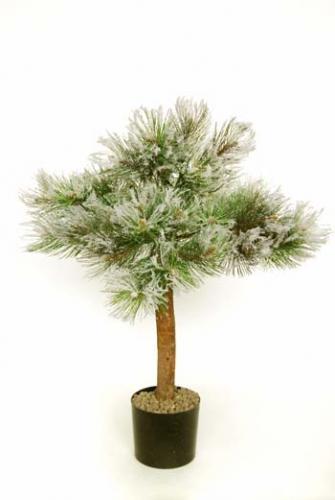 Pine_Canadian_Plant_80_cm_Snow