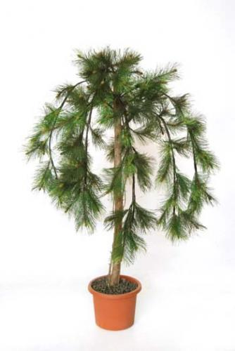 Pine_Canadian_Tree_140_cm_Green