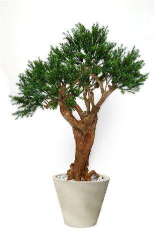 Pine_Taxus_Malabar_Lux_150_cm_Green_V_8105008