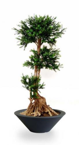 Pine_Taxus_Mash_140_cm_Green_Ciotola