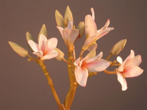 Plumeria_Flower_60_cm_Pink_4337PNK