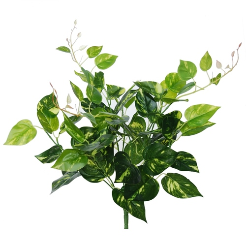 Pothos Bush 48 cm Variegated