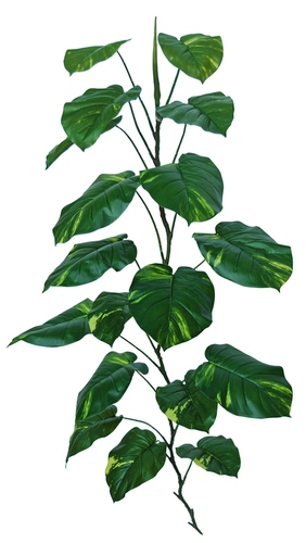 Pothos Giant 180 cm Green