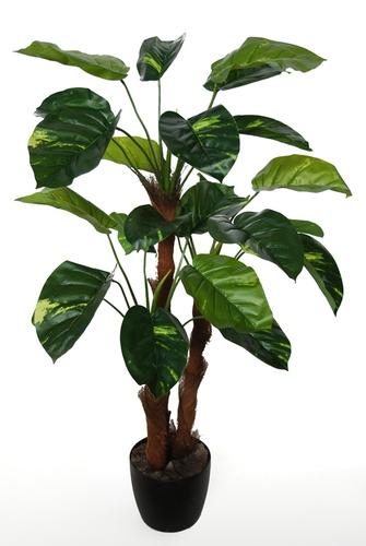 Pothos Plant 120 cm Green
