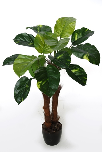 Pothos Plant 90 cm Green