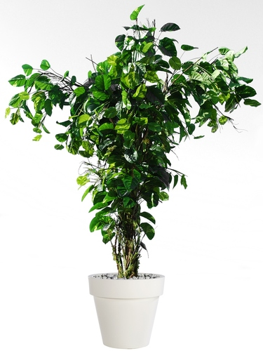 Pothos Tropical Tree 350 cm
