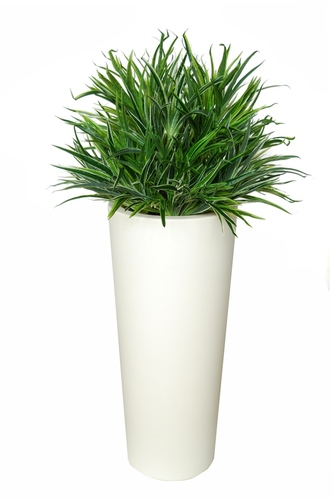Rainbow Bush 110 cm Green White
