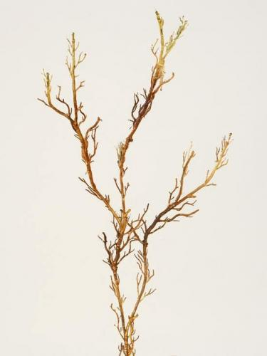 Root_Garland_52_cm_Brown_269