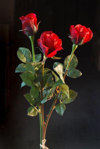 Rose_Bud_Set_x_3_70_cm_Red_5252RED