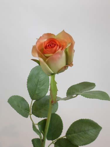 Rose_Princesse__58_cm_Orange_1395263