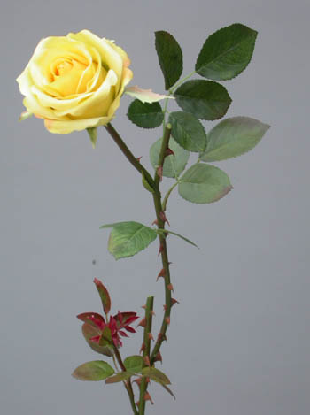 Rose_Tender_Large_60_cm_Lt_Yellow