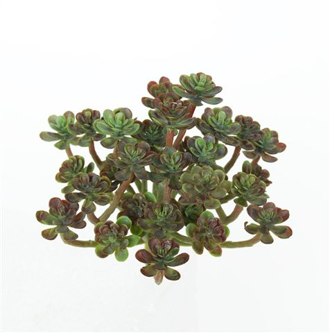 S_Echeveria_Mini_17_cm_Light_Green_5103LTG