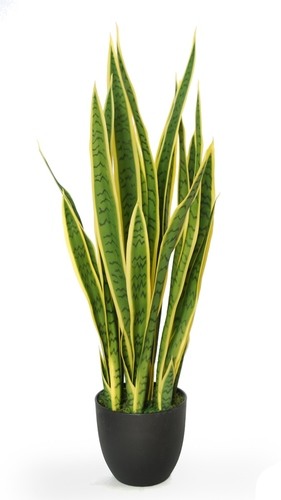 Sanseveria Trifasciata wpot 90 cm Green Yellow