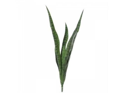 Sanseveria Zeylanica H 77