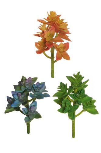 Sedum ASS colors ORANGE GREEN + DARK GREEN + PURPLE BLUE