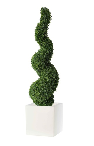 Boxwood spiral h 120 with vase